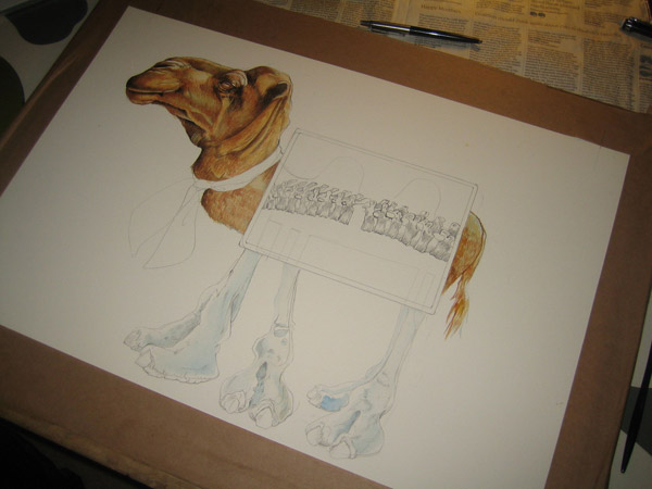 camel watercolour illustration in progress