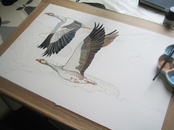 Watercolour painting of greylag geese in progress